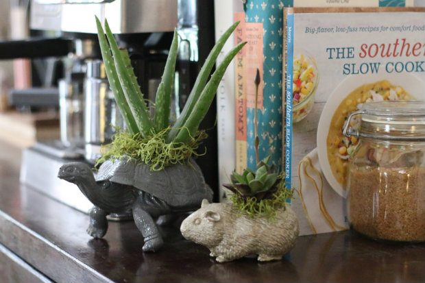 How to place house flowers in an apartment: 50 ideas for decorating succulents, photo