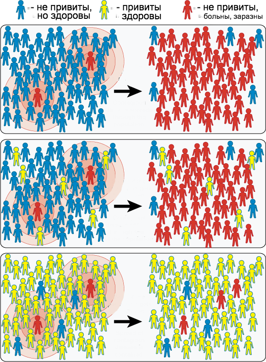 What is collective immunity, and why is it needed - image №1