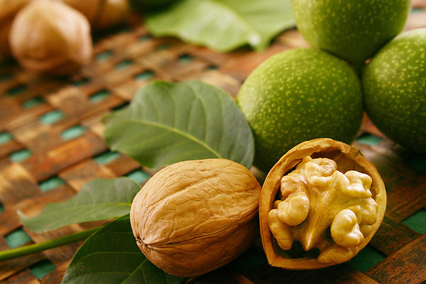 All about the healing properties of walnut - image №1
