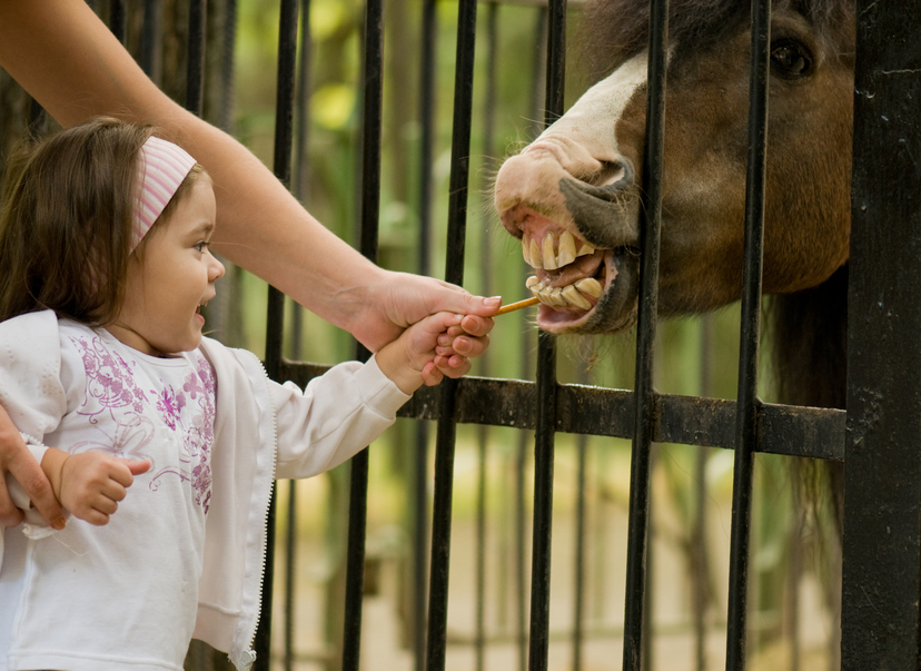 Hippotherapy: how to cure a child with riding? - image number 2
