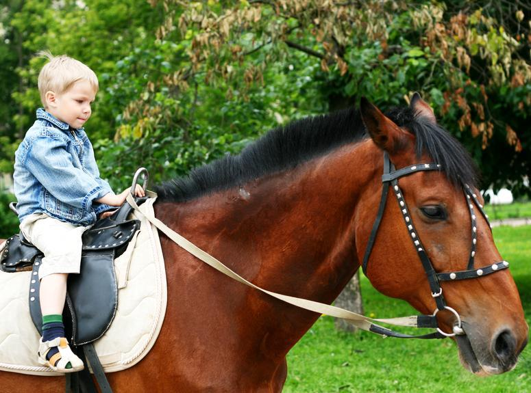 Hippotherapy: how to cure a child with riding? - image number 1